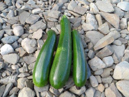Zucchini (courgette).