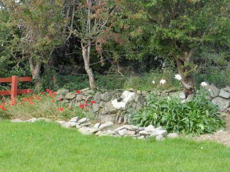 Poppies & Shasta Daisy flowers.