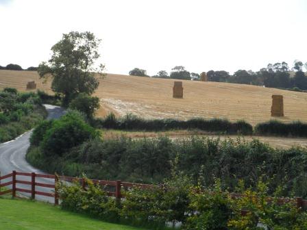 Fall harvest time in Sheepwalk.