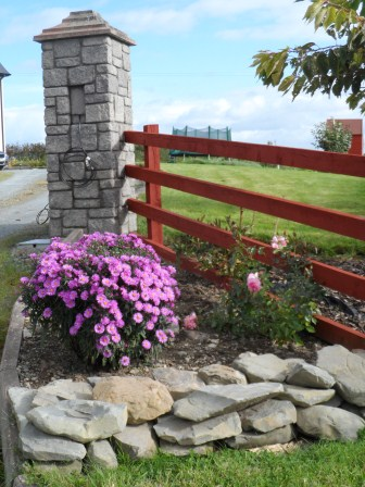 Asters at the front gate.