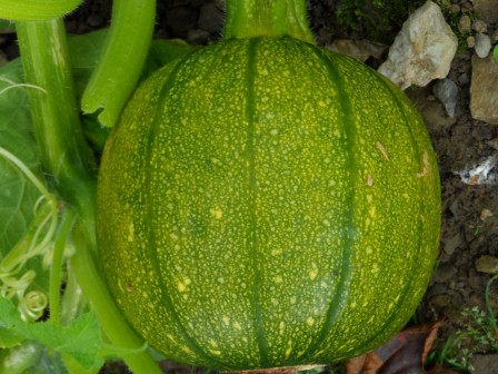 A lighter shade of green (and some orange?) Pumpkin.