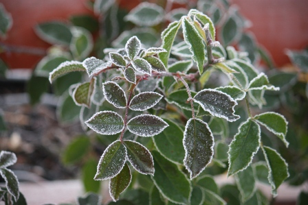 Frosty rose greens.