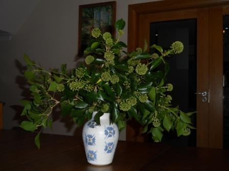 Ivy inside.