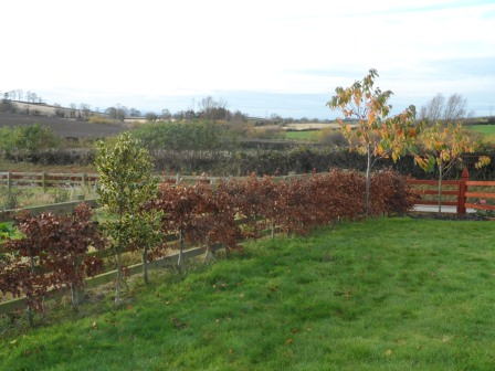 There are still a few more leaves left on the Cherry trees.