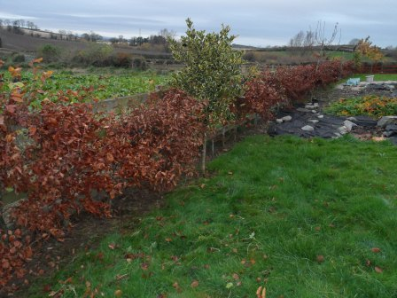 There was weeding underneath and cutting of the tops of the hedges this week.