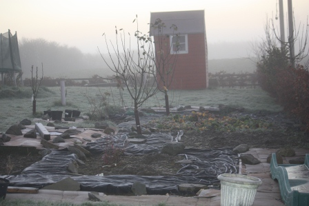 The garden on a foggy morning in December.