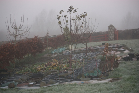 The other side of the garden on a foggy morning in December.
