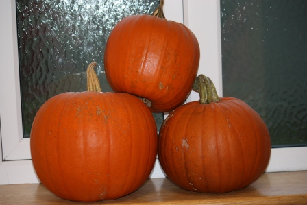 Pumpkins. And they're even orange!
