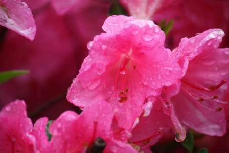 We had some rain, too.
