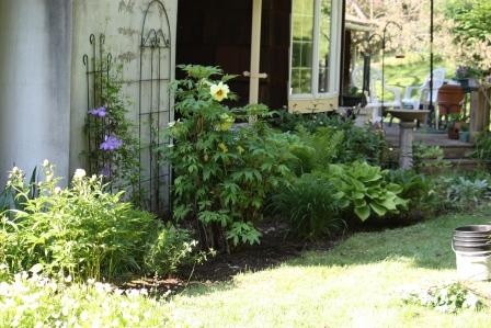 Betty and Harold's beautiful back garden.
