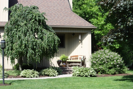 A beautiful weeping birch and welcoming bench at Lisa's!