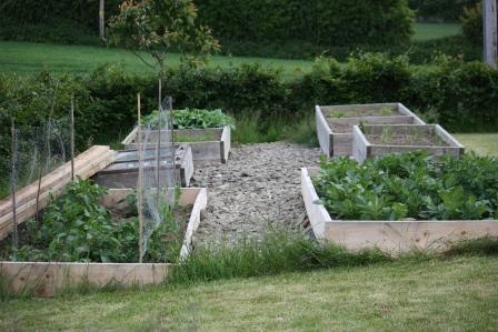 Vegetable beds in June.