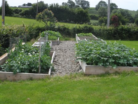 Our vegetable beds. Potatoes in the right front bed.