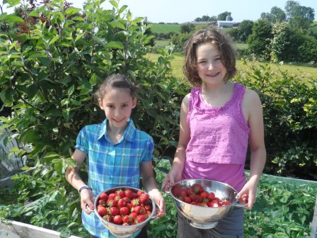 My two girls with their haul of strawberries one sunny morning.