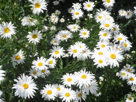 Happy summer flowers!