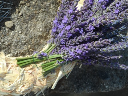 Small bunches of lavender.