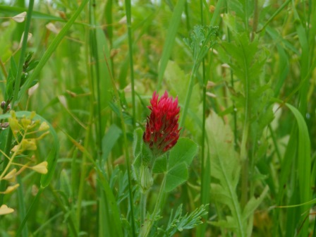 A single red flower.