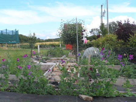 View of garden with Sweet Pea.