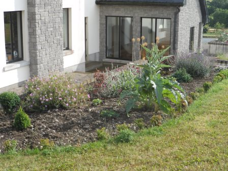 The front garden with a globe artichoke plant.