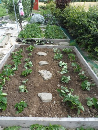 A neat and tidy new strawberry bed.