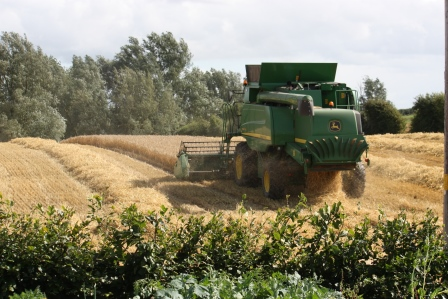 Harvesting the barley and leaving the straw.