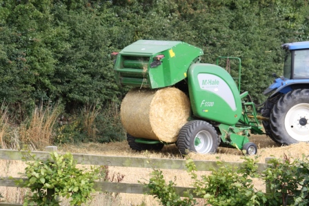 Bale of straw being rolled out.