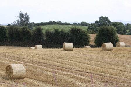 The field with bales of straw.
