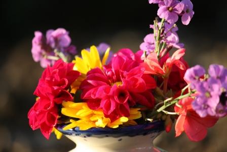 Fall flowers in the evening sunlight.