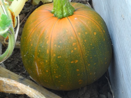 Can you believe how many photos of pumpkins I've taken?