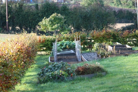 Fall look at the veggie beds.