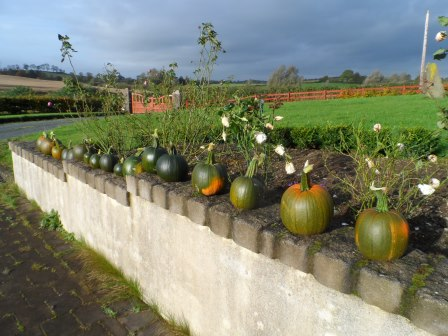 Green pumpkins sitting on the wall in October