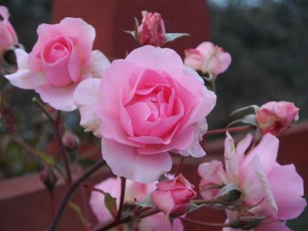 My favorite color: pink.