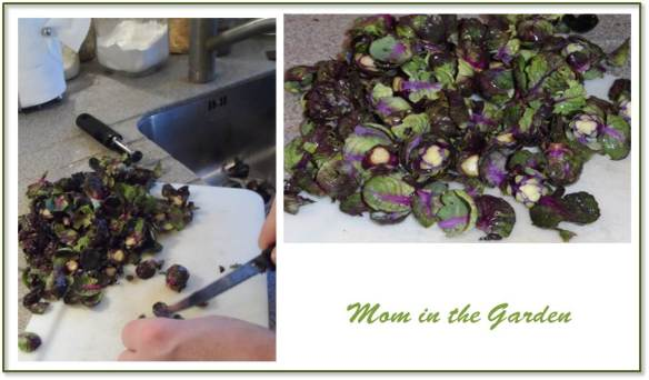Preparing our purple sprouts