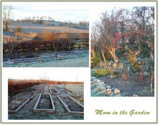 A look at the frozen garden