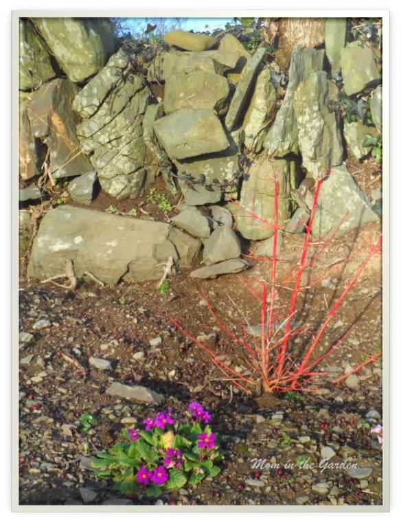 Dogwood plant