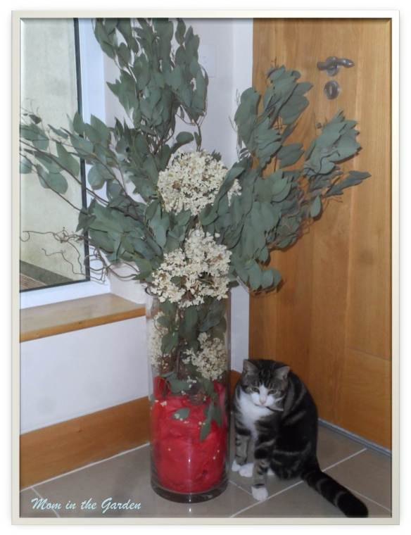 Kitty not leaving the arrangement alone...