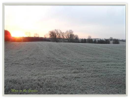 First morning light over the frosty field