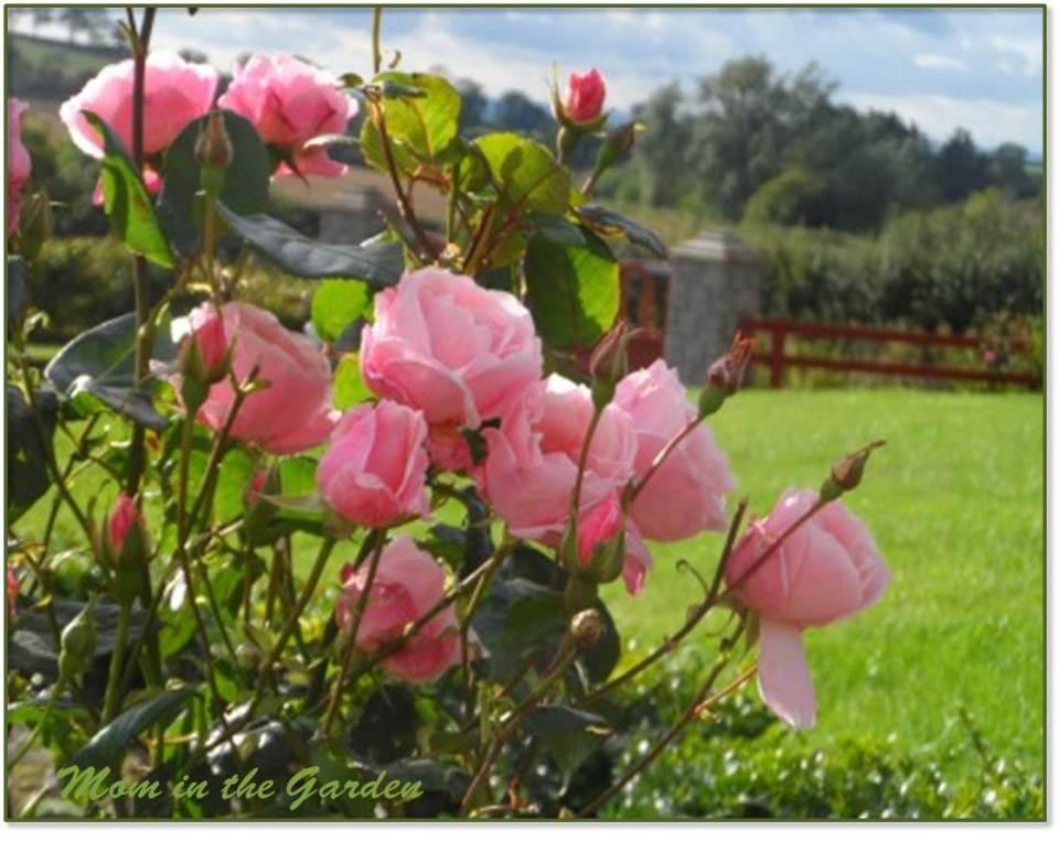 Summertime blooms