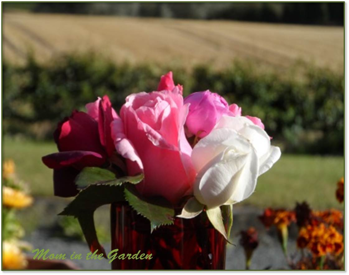 Roses to look forward to...