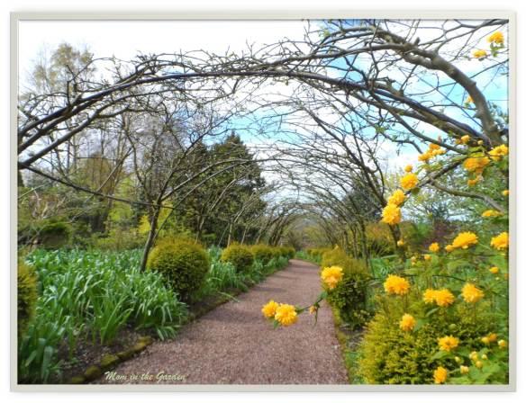Dorothy Clive Gardens (Laburnum Arch)
