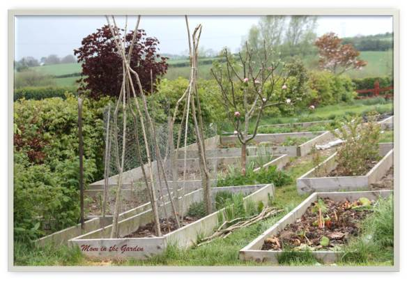 Newly built supports for our peas using hazel and chicken wire.