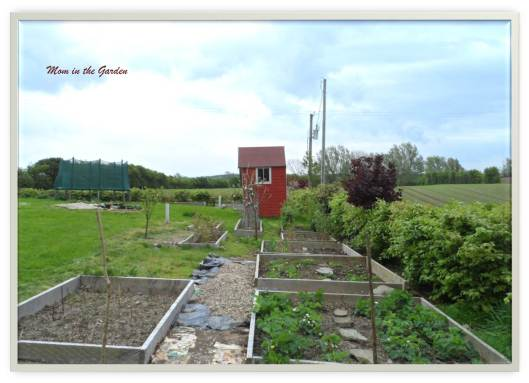 View of the fruit garden standing at the asparagus bed