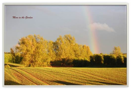 A golden evening with a rainbow in May