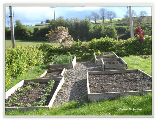 Vegetable beds in May