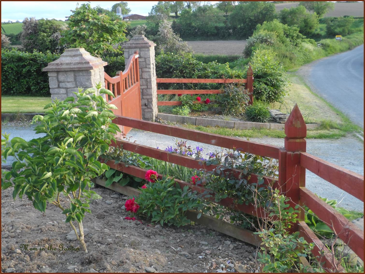Peony at the gate