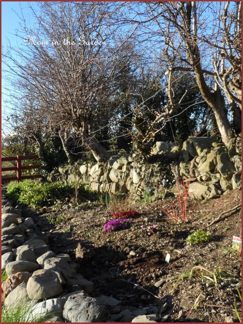 Ditch wall garden in March