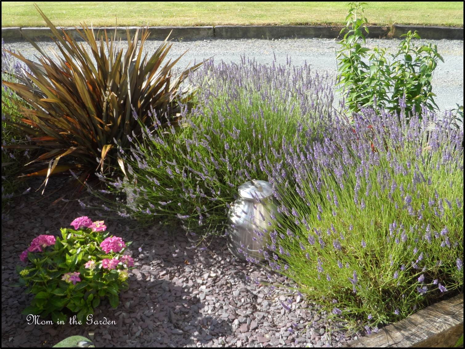 Full lavender garden view with milk container
