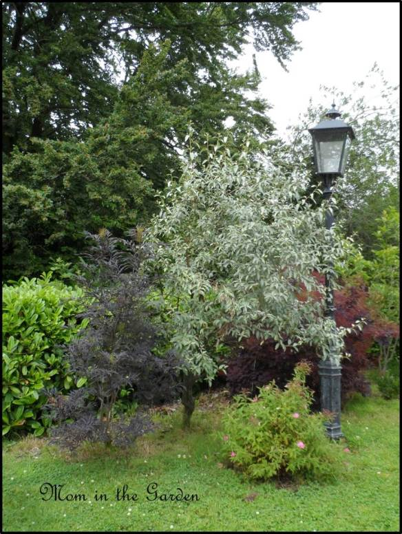 """I've called this picture """"Susan's Lamp"""" as I need to come back and fill in the names of plant/shrub/tree. Stay tuned..."""