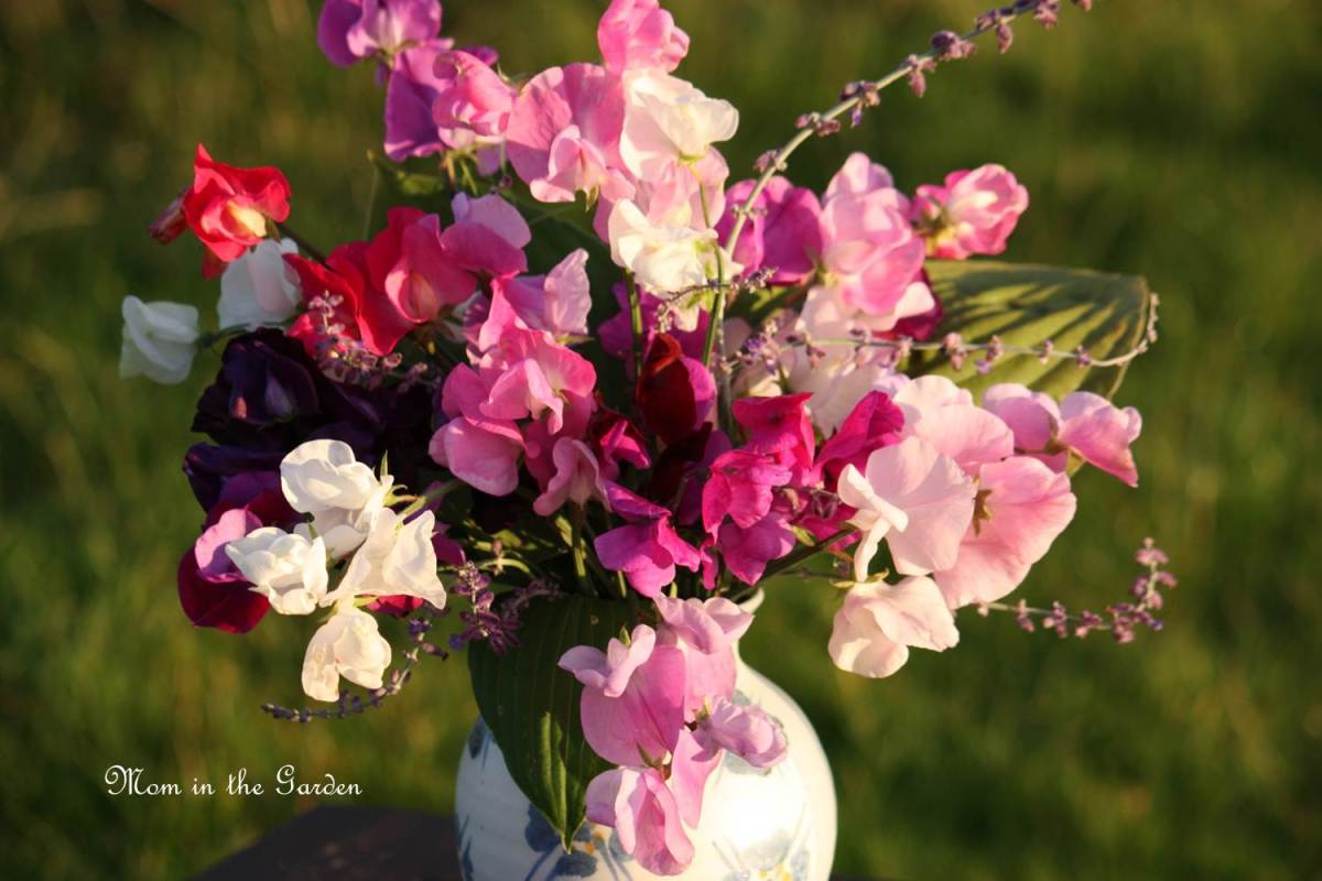 In a Vase on Monday: Sweet Pea, Hosta & Perovskia (Russian Sage)