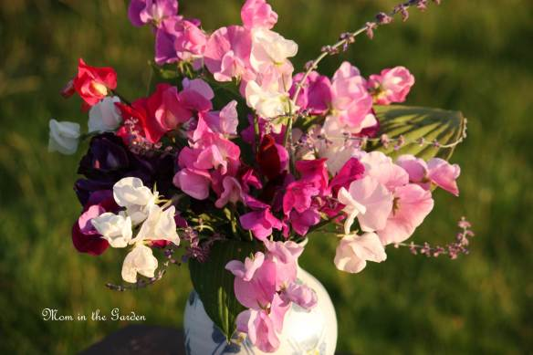 In a Vase: Sweet Pea, Hosta & Perovskia (Russian Sage)